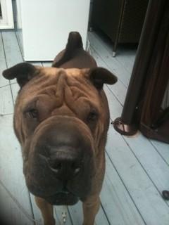 Dog Pic 46